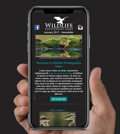 Wildlife Hides HTML Email | BJ Creative Email Design | Stamford
