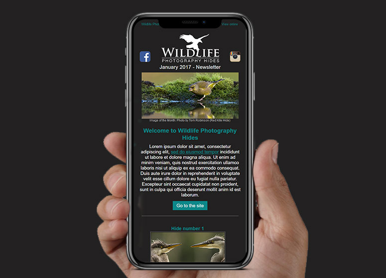 Wildlife Hides HTML Email | Stamford Email Design | BJ Creative